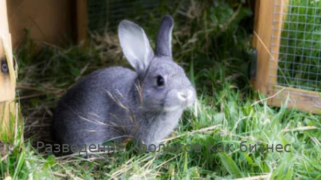 Разведение кроликов как бизнес